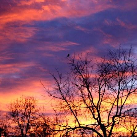 sunrise-through-winter-trees.jpg
