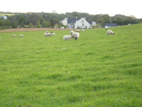 pasture next to cottage